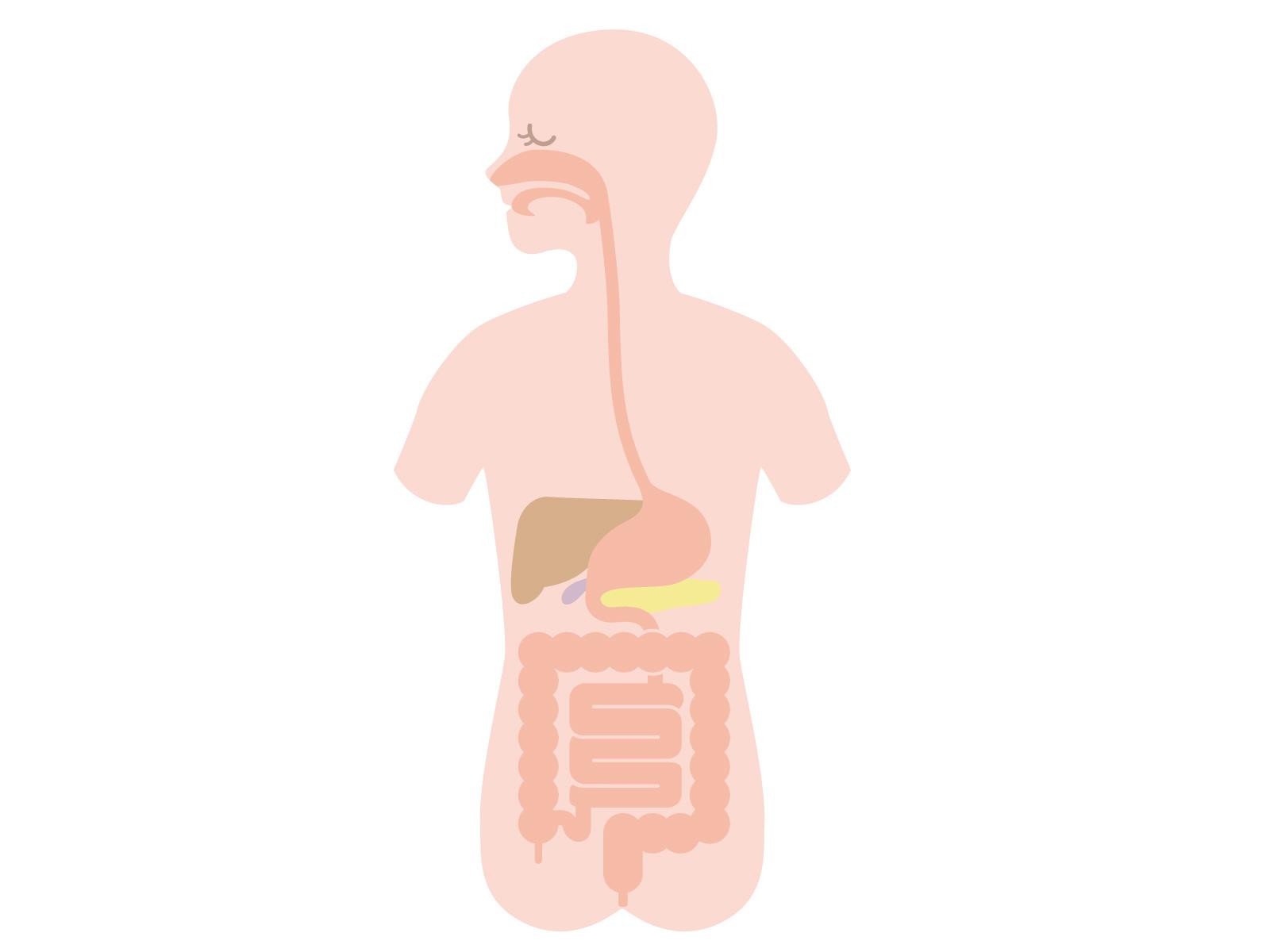 内臓への刺激